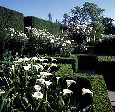 Sissinghurst Gardens - Kent, UK - 37586-20-1