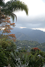 Strawberry Hill, Blue Mountains, Jamaica - 11448-180-1