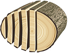 illustration sliced log, sawn timber - 80008-320-1