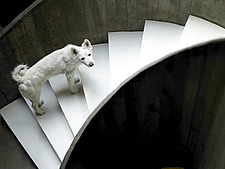Dog on curved staircase in Brazilian home - 14412-320-1