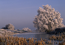 Frosty Morning at Blankney Fen, Lincolnshire - 860-CCC-1