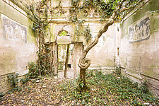 an abandoned villa that is in ruins where a tree is taking over the main room - ARC101289