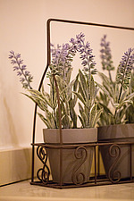 Wire planter holding pots of lavender - ARC104354