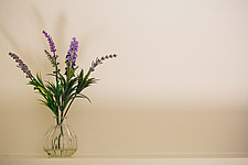Glass vase containing sprigs of lavender - ARC104356